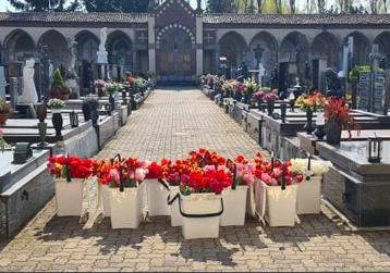 Një tulipan për këdo që  nuk pati një funeral